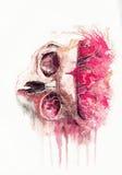 O crânio do espaço da aquarela ilustração stock