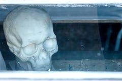 O crânio humano feito da gipsita atrás da arte de vidro e a Faculdade de Medicina modelam imagens de stock royalty free