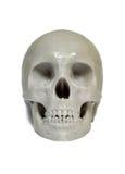 O crânio imprimiu com plástico da cor cinzenta em uma impressora 3d Fotos de Stock Royalty Free
