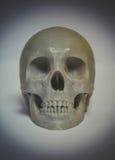 O crânio imprimiu com plástico da cor cinzenta em uma impressora 3d Imagens de Stock Royalty Free