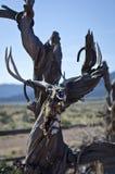 O crânio inoperante de suspensão dos cervos Fotos de Stock