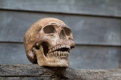 O crânio na madeira velha Ainda vida 1 Fotografia de Stock Royalty Free