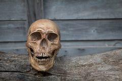 O crânio na madeira velha Ainda vida 1 Imagem de Stock Royalty Free