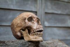 O crânio na madeira velha Ainda vida 1 Imagem de Stock