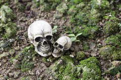 O crânio ou a fotografia humana de esqueleto Imagem de Stock