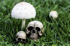O crânio ou a fotografia humana de esqueleto Foto de Stock Royalty Free