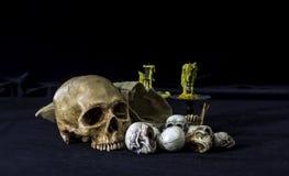 O crânio ou a fotografia humana de esqueleto Imagens de Stock Royalty Free