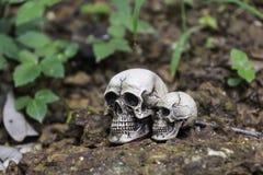 O crânio ou a fotografia humana de esqueleto Imagens de Stock