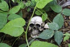 O crânio ou a fotografia humana de esqueleto Fotografia de Stock Royalty Free