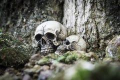 O crânio ou a fotografia humana de esqueleto Foto de Stock