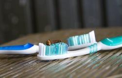 O cravo-da-índia no petróleo do Toothbrush-cravo-da-índia é bom para os dentes Foto de Stock Royalty Free