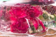 O cravo floresce no gelo, em um fundo de madeira Fotos de Stock