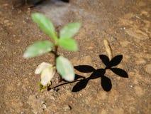 O crescimento vegetal acima Imagens de Stock