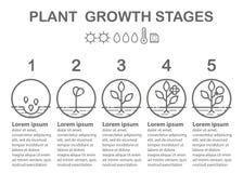 O crescimento vegetal encena o infographics Linha ícones da arte Plantando o molde da instrução Imagem de Stock Royalty Free