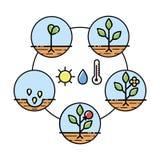 O crescimento vegetal encena o infographics Linha ícones da arte Plantando o molde da instrução Ilustração linear do estilo isola Foto de Stock Royalty Free