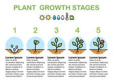O crescimento vegetal encena o infographics Linha ícones da arte Projeto liso Imagem de Stock