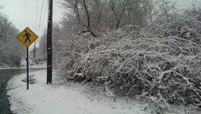 O cruzamento pedestre assina dentro o inverno Fotografia de Stock