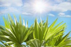 O céu azul ensolarado das folhas de palmeira nubla-se no fundo Fotos de Stock Royalty Free