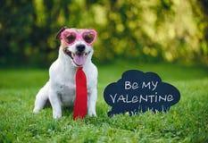 O cumprimento do cartão dos Valentim com o laço e vidros vestindo do cão ao lado da inscrição no quadro-negro 'seja meu Valentim  fotografia de stock royalty free