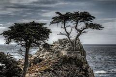 O Cypress solitário fotos de stock royalty free