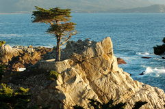 O Cypress solitário Fotos de Stock