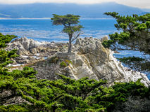 O Cypress solitário, Pebble Beach, CA Fotografia de Stock