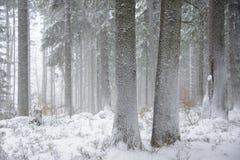 O _da paisagem de Winteer Neve-varreu a floresta imagem de stock royalty free