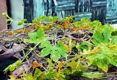 O ` das videiras descasca o ` sobre o bambu tecido Imagem de Stock Royalty Free