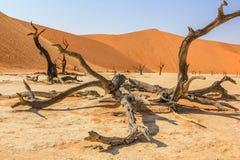 O Deadvlei solitário e famoso: árvores secas no meio do deserto de Namib Imagens de Stock