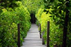 O decandra de Ceriops da floresta dos manguezais igualmente conhecido como os destinos dourados do dente do prado de Rayong, Tail fotos de stock royalty free
