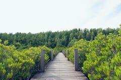 O decandra de Ceriops da floresta dos manguezais igualmente conhecido como os destinos dourados do dente do prado de Rayong, Tail imagem de stock royalty free