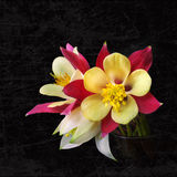 O delfínio da orquídea floresce o ramalhete excelente em um preto Fotografia de Stock