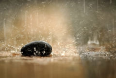 O delicado focalizou a rocha de pedra do zen na religião do nuture da chuva Foto de Stock Royalty Free