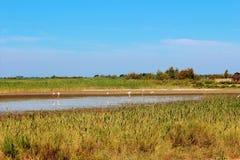O delta de Camargue, França Fotos de Stock Royalty Free