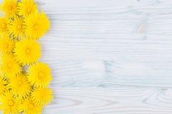 O dente-de-leão amarelo floresce como a beira decorativa na luz - placa de madeira azul Copie o espaço, vista superior Fotografia de Stock Royalty Free