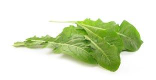 O dente-de-leão sae da salada Imagem de Stock