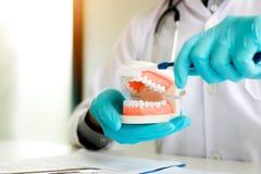 O dentista asiático do homem está guardando a maxila das dentaduras que mostra como escovar t foto de stock