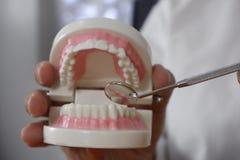 O dentista que usa ferramentas nos dentes modela no conceito dental profissional da clínica do escritório dental, o dental e o mé imagens de stock royalty free