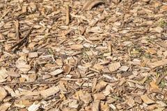 O derramamento de madeira fresco é enchido uniformemente em um assoalho Um fundo para o projeto Tiro horizontal imagem de stock royalty free