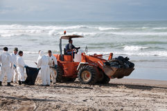 O derramamento de petróleo de Rena limpa trabalhadores Foto de Stock