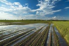 O desastre agrícola, campo do feijão de soja inundado colhe foto de stock royalty free
