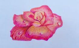 O desenho cor-de-rosa de Rosa no fundo do Livro Branco, olha bonito Para amantes dos pares no dia do ` s do Valentim Imagem de Stock