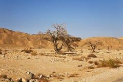 O deserto em Israel Imagens de Stock