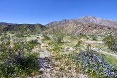 o deserto vem vivo com flores e crescimento novo fotografia de stock royalty free