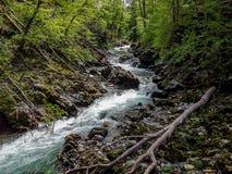 O desfiladeiro de Vintgar - joia da natureza, sangrada, Eslovênia Fotos de Stock Royalty Free