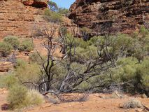 O desfiladeiro dos reis australianos Garganta Fotografia de Stock Royalty Free