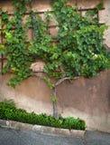 O detalhe do jardim Fotografia de Stock