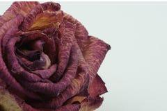 O detalhe macro da textura do secado aumentou fotografia de stock royalty free
