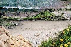 O detalhe Tidepools Carpinteria blefa o Oceano Pacífico Califórnia da costa da conserva de natureza fotografia de stock royalty free