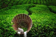 O dia da colheita Imagem de Stock Royalty Free